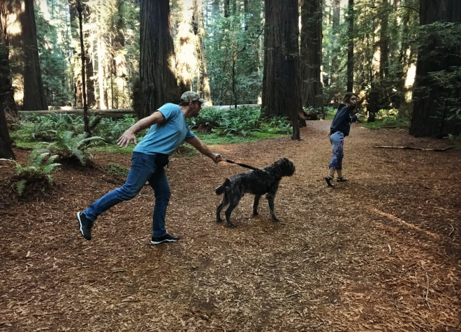 Redwoods7